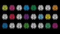 Different coloured brains